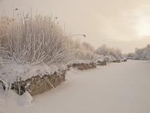 Övervintra det molniga landskapet med frost på filialer av träden på flodsidorna Arkivfoto