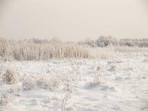 Övervintra det molniga landskapet med frost på rottingar och filialer av buskar Arkivbilder