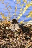 Övervintra fåglar på sjön på en solig dag arkivbilder