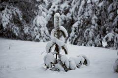 Övervintra felika snöig skogträd i vita ämbetsdräkter Royaltyfri Foto