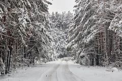 Övervintra felika snöig skogträd i vita ämbetsdräkter Fotografering för Bildbyråer
