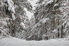 Övervintra felika snöig skogträd i vita ämbetsdräkter Arkivfoto