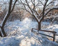 Övervintra frostade trees som tändas av morgonsunen. Royaltyfri Foto