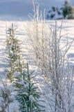 Övervintra jord, och träd täckas med snö Arkivfoton