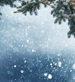 Övervintra julbakgrund med granträdfilialen och kottar Arkivbilder