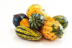 Övervintra kalebasser i olika former halloween och tacksägelse Fotografering för Bildbyråer