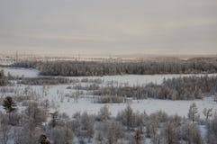 Övervintra landskape med skogen i insnöat aftonsolnedgången norr Fotografering för Bildbyråer