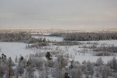 Övervintra landskape med skogen i insnöat aftonsolnedgången norr Royaltyfri Bild