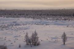 Övervintra landskape med skogen i insnöat aftonsolnedgången norr Royaltyfria Bilder