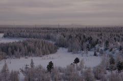 Övervintra landskape med skogen i insnöat natten norr Arkivfoto