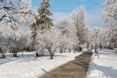 Övervintra landskapet av frostiga träd, den vita insnöade staden parkerar räknade snowtrees Fotografering för Bildbyråer