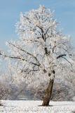 Övervintra landskapet av frostiga träd, den vita insnöade staden parkerar räknade snowtrees Arkivfoto