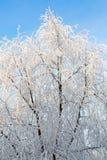 Övervintra landskapet av frostiga träd, den vita insnöade staden parkerar räknade snowtrees Arkivfoton