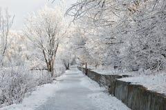 Övervintra landskapet av frostiga träd, den vita insnöade staden parkerar räknade snowtrees Royaltyfri Foto