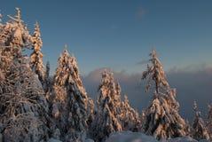 Övervintra landskapet av snö täckte träd på soluppgång arkivbilder