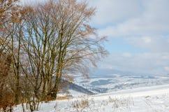 Övervintra landskapet, bänken under snön, träd med gula sidor Arkivbild