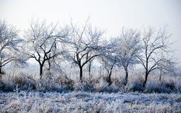 Övervintra landskapet, closeupen för träd i rad, frosten på gräset Royaltyfri Fotografi