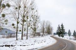 Övervintra landskapet, den snö täckte vägen i bergen med träd Royaltyfri Bild