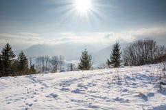 Övervintra landskapet, det grön gran beskyddade formatet, julgran Royaltyfri Bild