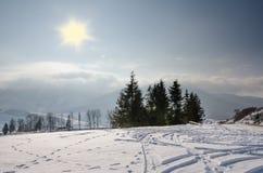 Övervintra landskapet, det grön gran beskyddade formatet, julgran Royaltyfri Fotografi