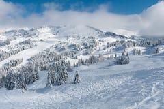 Övervintra landskapet i berg med snö och snöa dolda träd arkivfoto