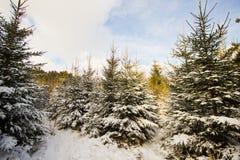Övervintra landskapet i skogen med träden som täckas med vit Arkivbilder
