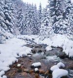 Övervintra landskapet med floden i frostig dag Arkivfoton