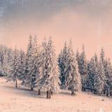 Övervintra landskapet med insnöade berg Carpathians, Ukraina VI Arkivbilder
