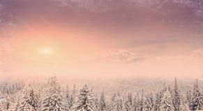 Övervintra landskapet med insnöade berg Carpathians, Ukraina VI Fotografering för Bildbyråer