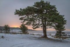 Övervintra landskapet med sörjer trädet Norge, Fredrikstad Arkivbild