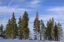 Övervintra landskapet med skogen för granträd som täckas av det tunga insnöade Postavaru berget, den Poiana Brasov semesterorten, Arkivfoto