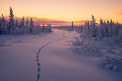 Övervintra landskapet med skogen, molnig himmel och solen royaltyfri fotografi