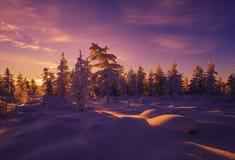 Övervintra landskapet med skogen, molnig himmel och solen arkivfoto