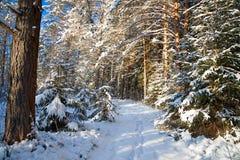 Övervintra landskapet med skogen och en vandringsled Royaltyfri Foto