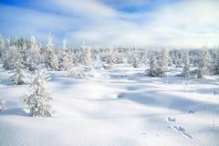 Övervintra landskapet med skogen och spåren av en hare på snö Royaltyfria Bilder