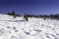 Övervintra landskapet med snö täckt träd och blå himmel Fotografering för Bildbyråer