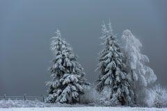 Övervintra landskapet med snöig jul för granträd och skog royaltyfri fotografi