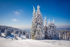 Övervintra landskapet med snöig träd och blå himmel Fotografering för Bildbyråer