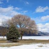 Övervintra landskapet med stora träd vid den djupfrysta sjön Royaltyfri Bild