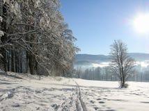 Övervintra landskapet med vägskogen och blå himmel vintrig bana Frostig solig dag snöig winterly landskap arkivfoton