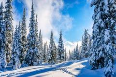Övervintra landskapet på bergen med snö täckte träd Arkivbilder