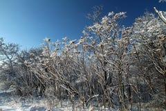Övervintra landskapet på den Khortitsa ön i Zaporizhzhia Royaltyfria Bilder