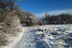 Övervintra landskapet på den Khortitsa ön i Zaporizhzhia Arkivbilder