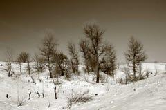 Övervintra landskapet på den Khortitsa ön i Zaporizhzhia Arkivfoto