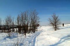 Övervintra landskapet på den Khortitsa ön i Zaporizhzhia Royaltyfri Fotografi