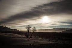 Övervintra landskapet på solnedgången med trädet, Tibet arkivbilder