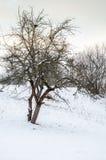 Övervintra landskapet, snö-korkade berg, träd på en bakgrundsnolla Royaltyfri Foto