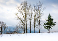 Övervintra landskapet, snö-korkade berg, träd på en bakgrundsnolla Royaltyfri Bild