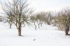 Övervintra landskapet, snö-korkade berg, träd på en bakgrundsnolla Royaltyfri Fotografi