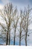 Övervintra landskapet, snö-korkade berg, träd på en bakgrundsnolla Arkivfoton